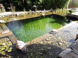 Les piscines biologiques, une nouvelle tendance