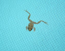 Comment éloigner les grenouilles autour et dans votre piscine